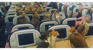 أمير سعودي يحجز 80 مقدا لصقوره في طائرة