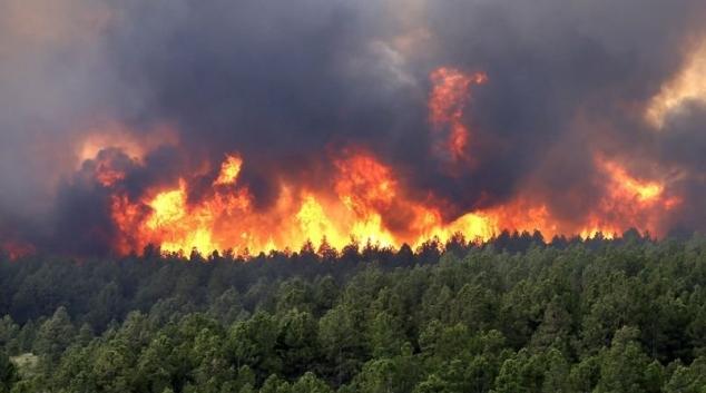 الجيش الوطني والحماية المدنية يخمدان 80 بالمئة من حرائق جندوبة