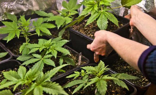 بن عروس: تفكيك شبكة دولية لترويج المخدرات وحجز 1500غرام من مخدّر