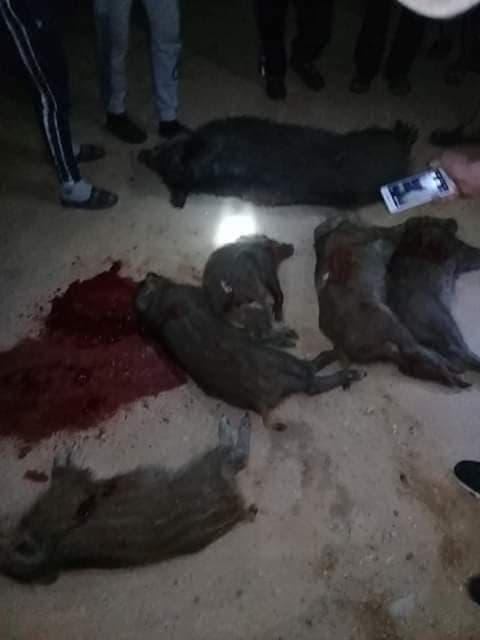 الرديف: هجوم عنيف لقطيع من الخنازير على منزل أحد المتساكنين (صور)