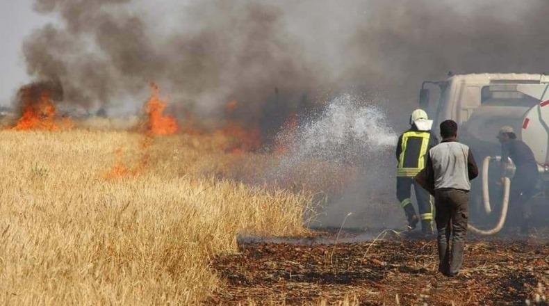 إتحاد الفلاحة يدعو إلى فتح تحقيق جدي وعاجل لكشف أسباب الحرائق