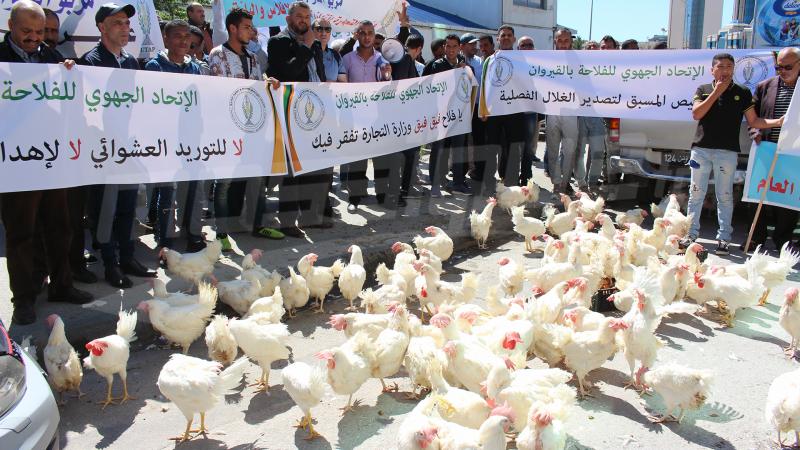 بسبب توريد اللحوم البيضاء: منتجو الدواجن يطلقون صيحة فزع