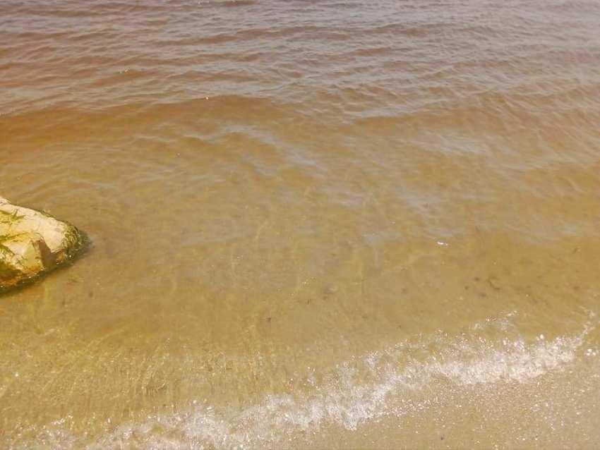 قرطاج : لون البحر يتحول إلى الأصفر