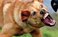 بعد تسجيل حالات داء الكلب.. وزارة الصحة تحذر