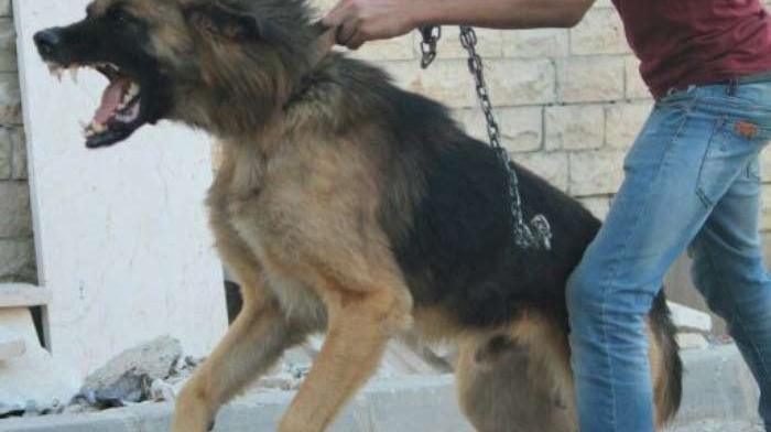 العاصمة: القبض على شاب نفّذ سلسلة من البراكاجات بواسطة كلب شرس