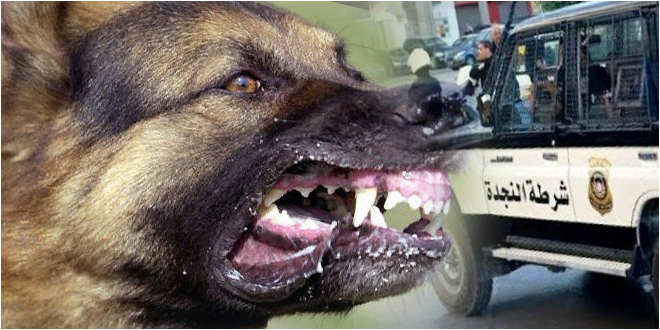 منحرف خطير يحيل 3 أمنيين على المستشفى بعد أن عمد إطلاق كلابا شرسة عليهم