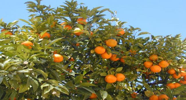 فاكهة شتوية تحتوي على جميع انواع الفيتامينات