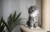 تكشف لأول مرّة: 7 فوائد كبيرة تمنحها القطط لصحة الانسان!!