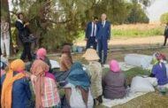 رئيس الجمهورية يزور عاملات فلاحة في بوسالم