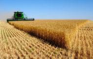سيدي بوزيد: تراجع صابة الحبوب