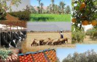 إرتفاع صادرات المنتوجات الفلاحية نحو ليبيا